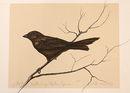 Dalton Canon Winter Sparrow